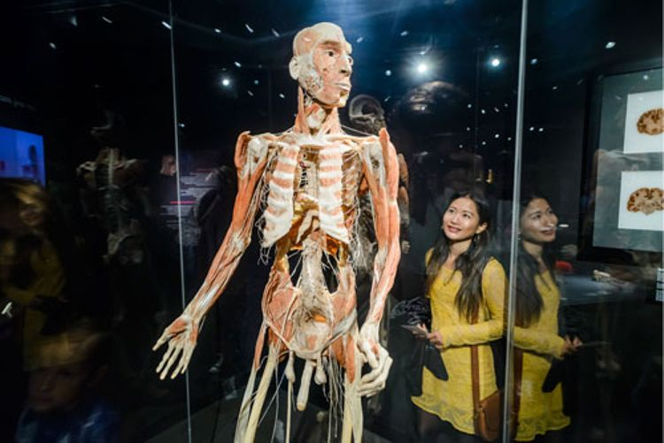 Body Worlds + Hop-On Hop-Off Amsterdam